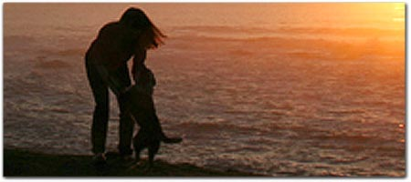 Please Request Pet Friendly Room Click For More Information On Beachcomber Motel And Spa The Beach