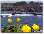 Click for more information on Mendocino Coast Botanical Gardens.
