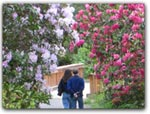 Click for more information on APR-MAY | Rhododendrons Walks.