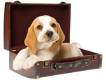 Click for more information on Dog Friendly Lodging.