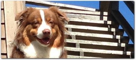 Is Sea Ranch Motel Dog Friendly