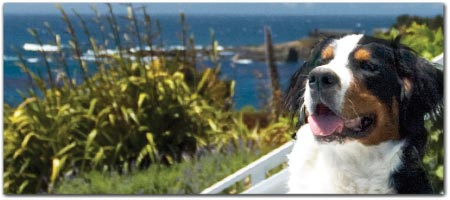 Mendocino Dog Pet Friendly Lodging Hotels Inns Bnbs Dogs Ok