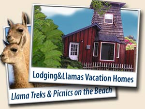 Lodging and Llamas