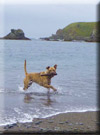 Click for more information on McDog Off Leash Beach.