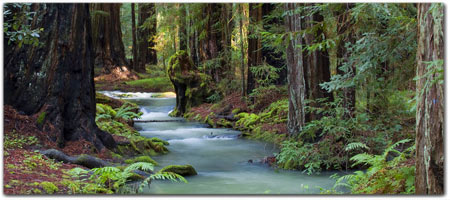 <br>MONTGOMERY WOODS<br>~ ANCIENT REDWOOD FORESTS ~
