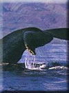 Click for more information on Noyo Fishing w/ Whale Watching.