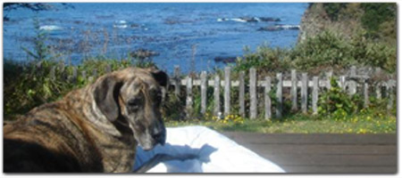 Please Request Pet Friendly Room Click For More Information On Serenisea Vacation Homes