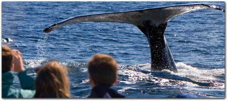 CHARTER BOATS<br> ~ FISHING &amp; WHALE WATCHING TOURS ~