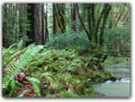 Click for more information on Mendocino Woodlands Campground.
