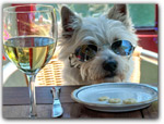 PLACES TO EAT WITH YOUR DOGGIE